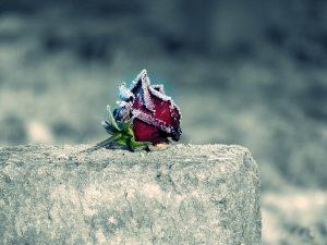 Rose - Sterben